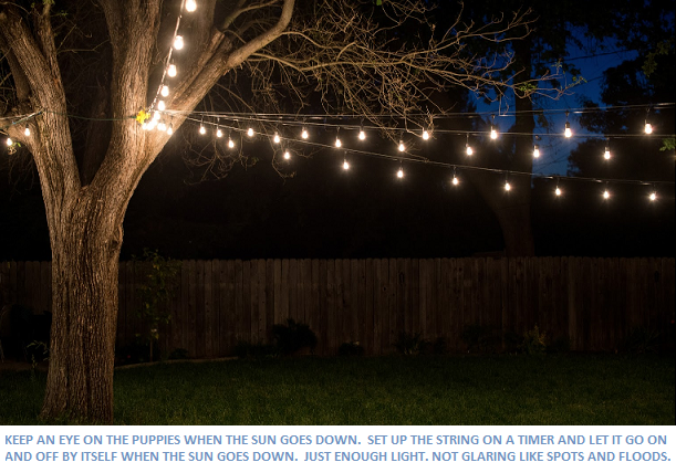 String Lights For The Back Yard